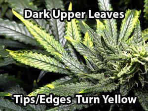 Copper deficiency growing exposed mightylinksfo